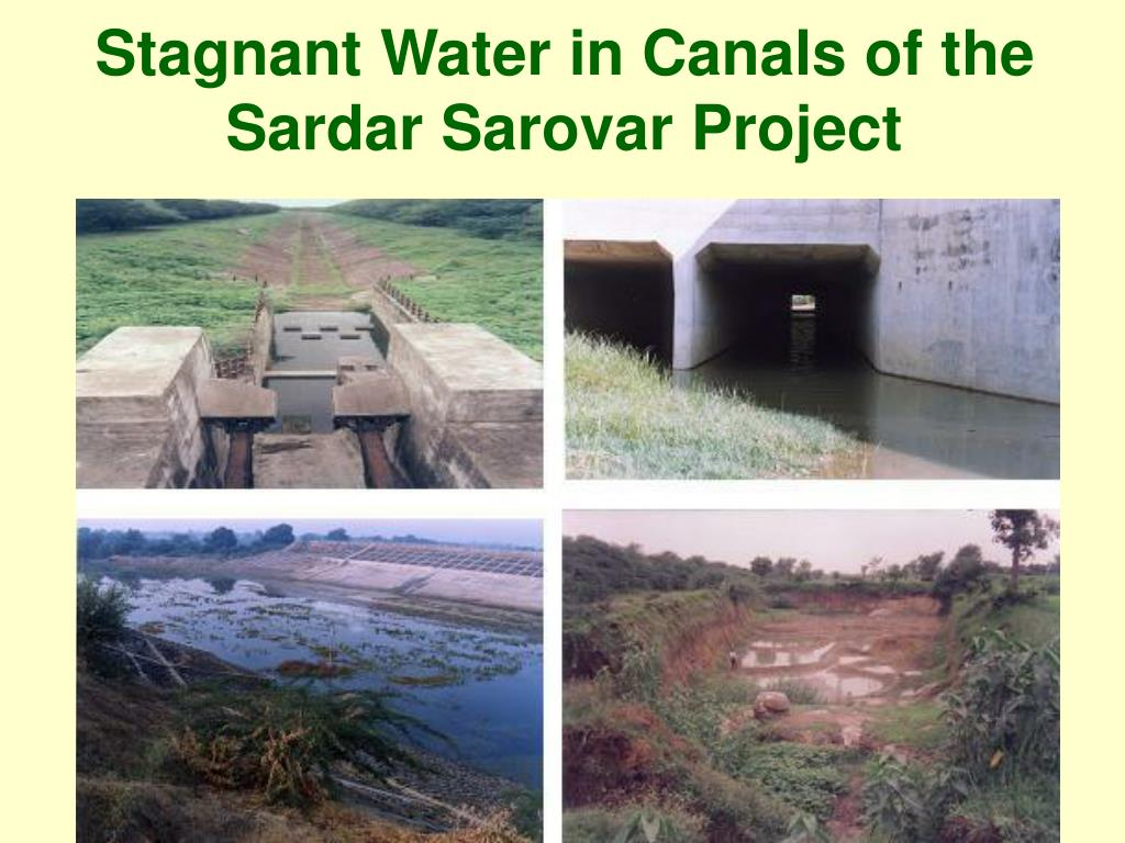Stagnant Water in Canals of the