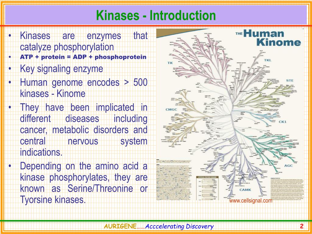 Kinases - Introduction