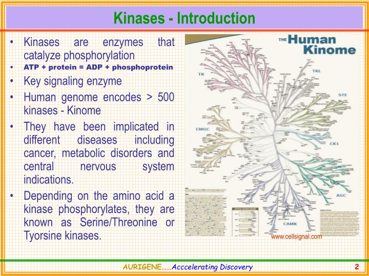 Kinases introduction