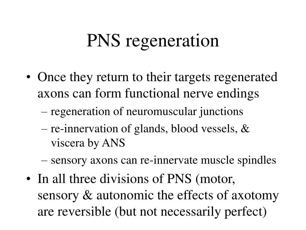 PNS regeneration
