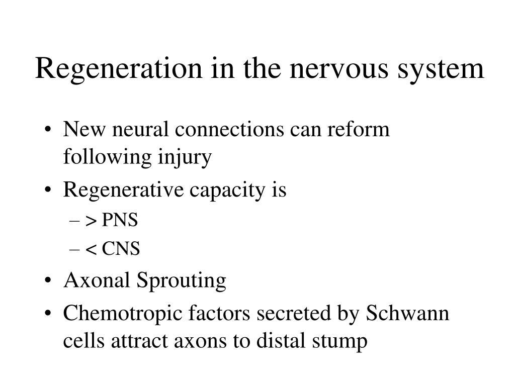 Regeneration in the nervous system