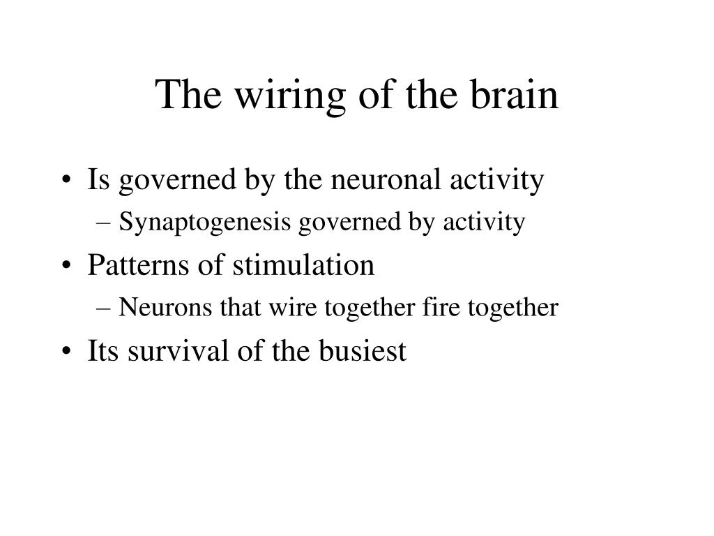 The wiring of the brain