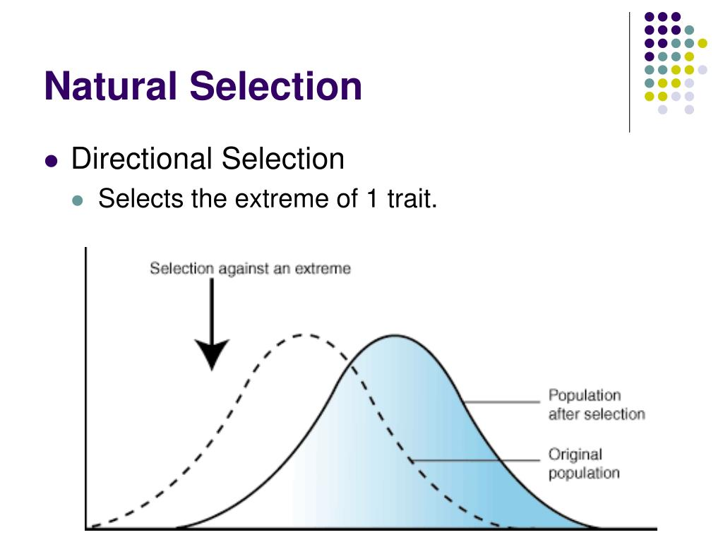 Explain How Evolution By Natural Selection Works