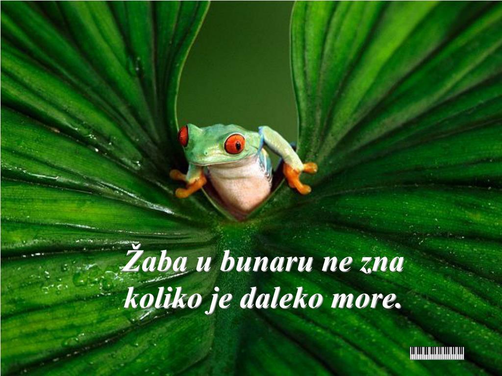 Žaba u bunaru ne zna  koliko je daleko more.