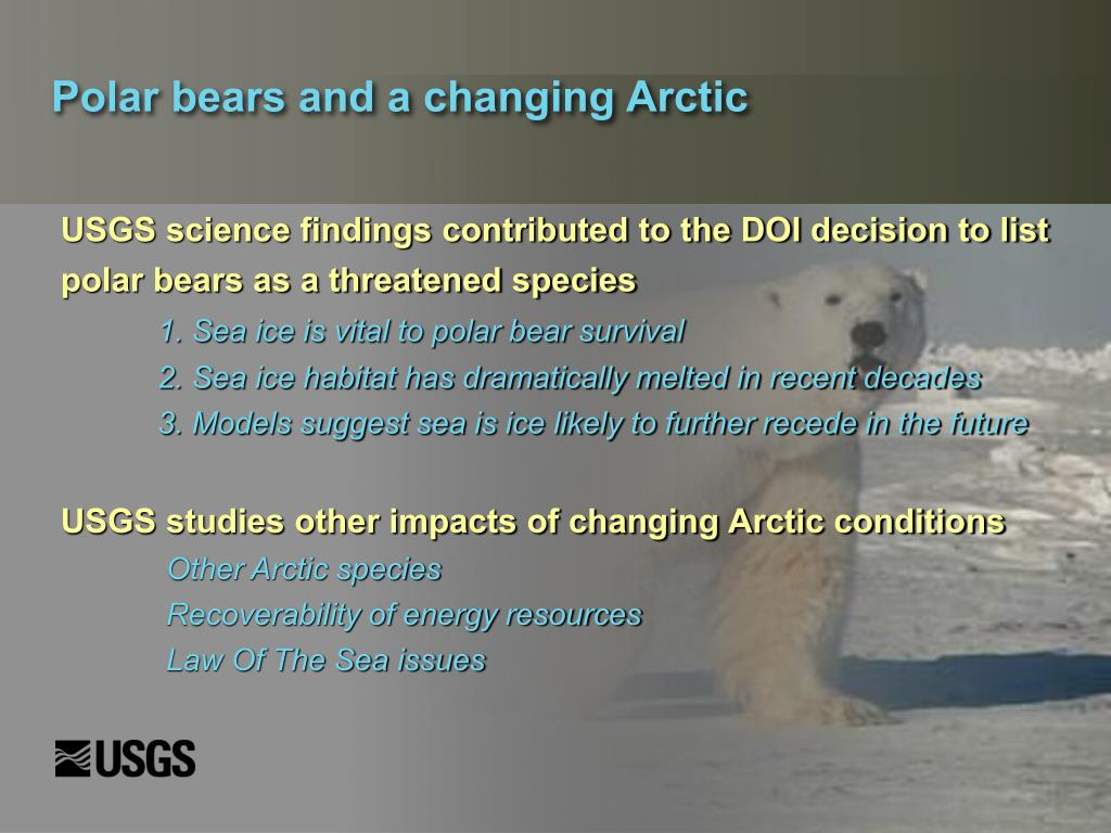Polar bears and a changing Arctic
