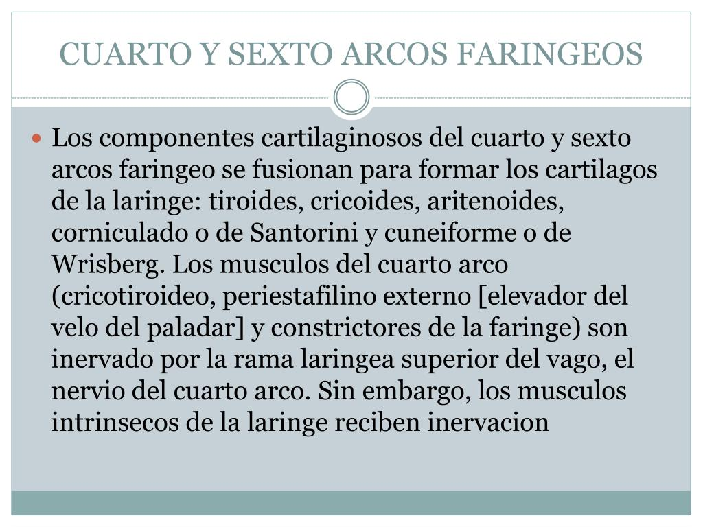 CUARTO Y SEXTO ARCOS FARINGEOS
