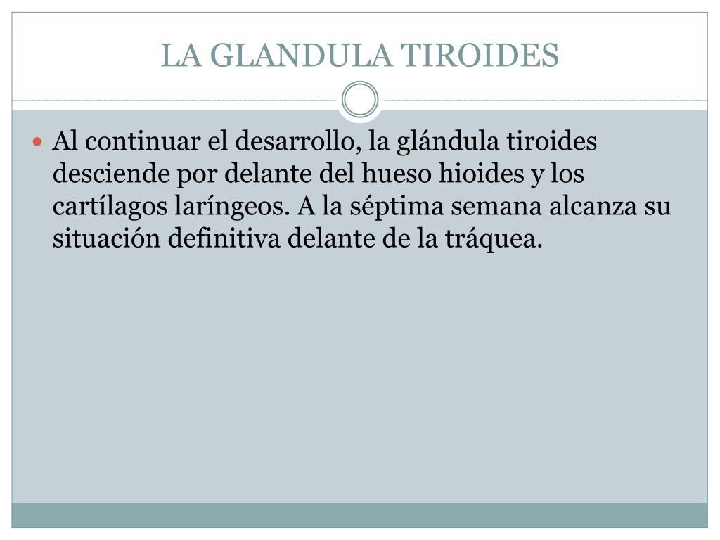 LA GLANDULA TIROIDES