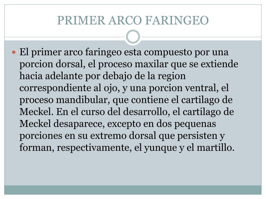 PRIMER ARCO FARINGEO