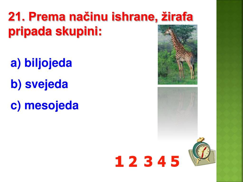 21. Prema načinu ishrane, žirafa pripada skupini:
