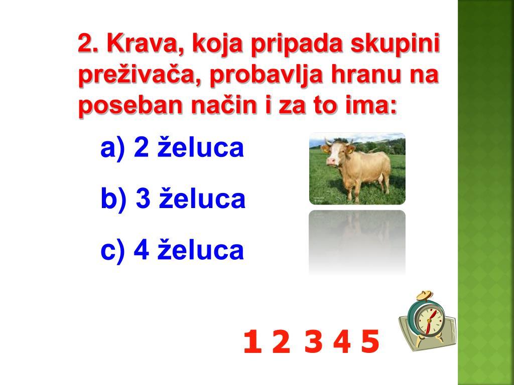 2. Krava, koja pripada skupini