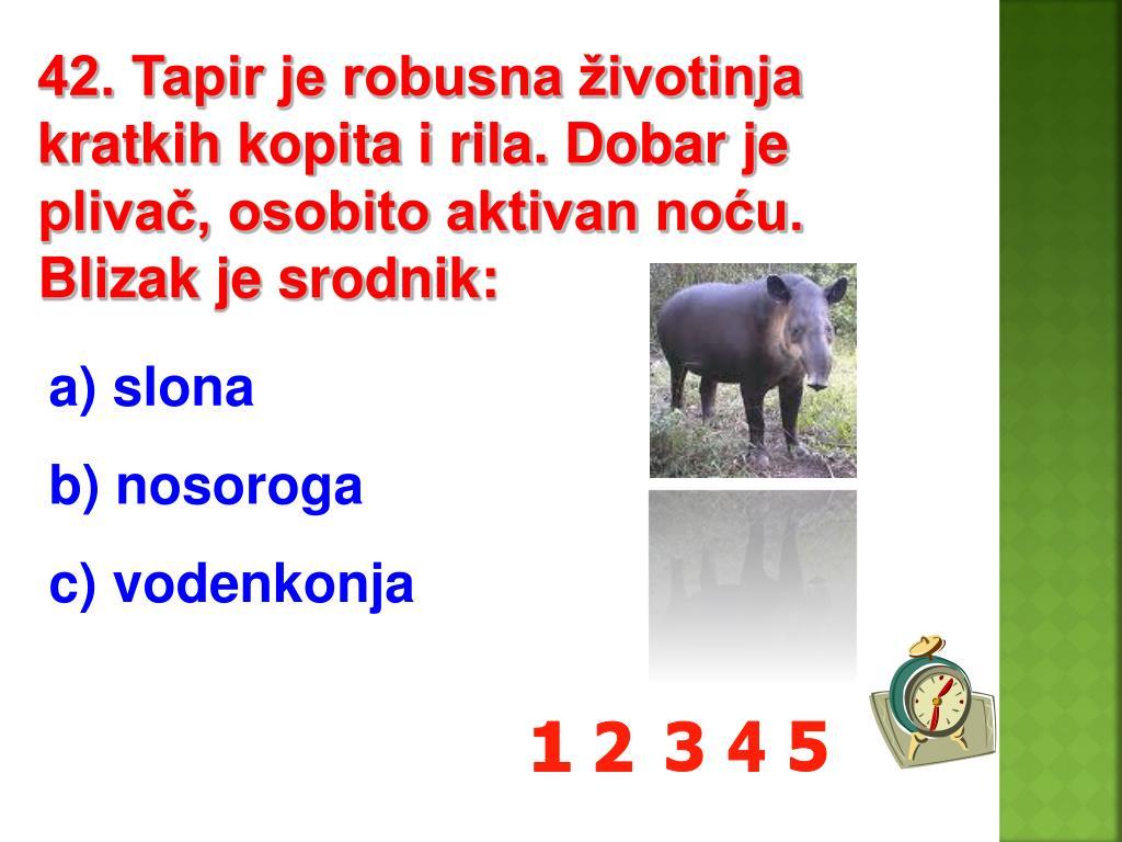 42. Tapir je robusna životinja kratkih kopita i rila. Dobar je plivač, osobito aktivan noću. Blizak je srodnik: