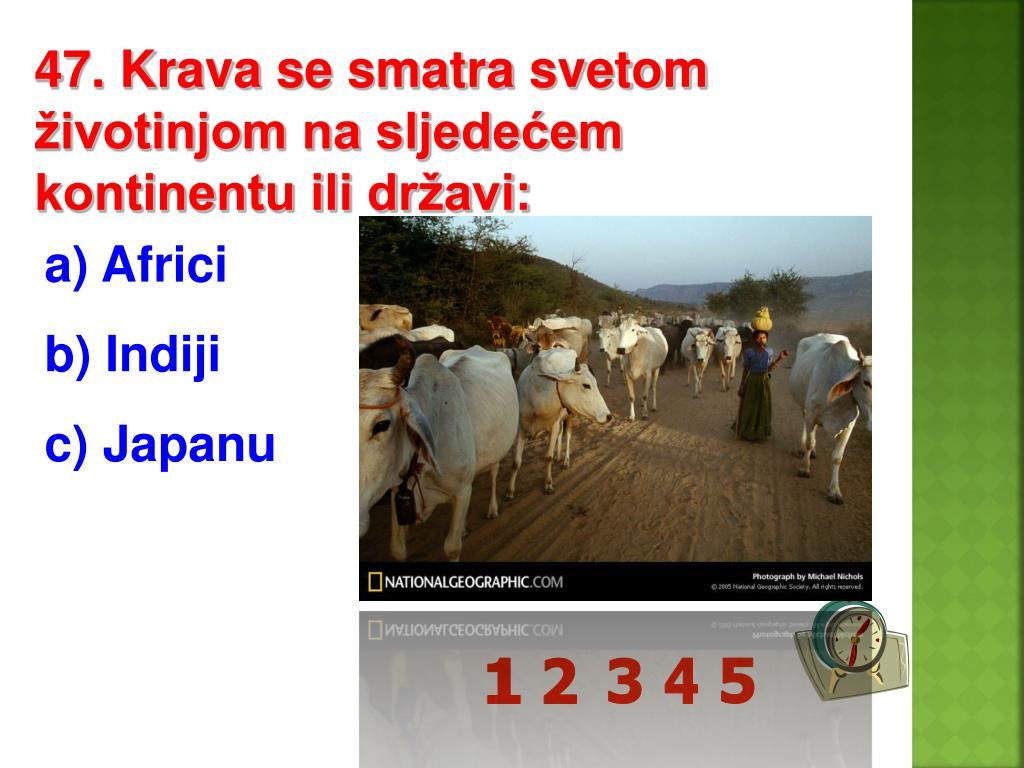 47. Krava se smatra svetom životinjom na sljedećem kontinentu ili državi:
