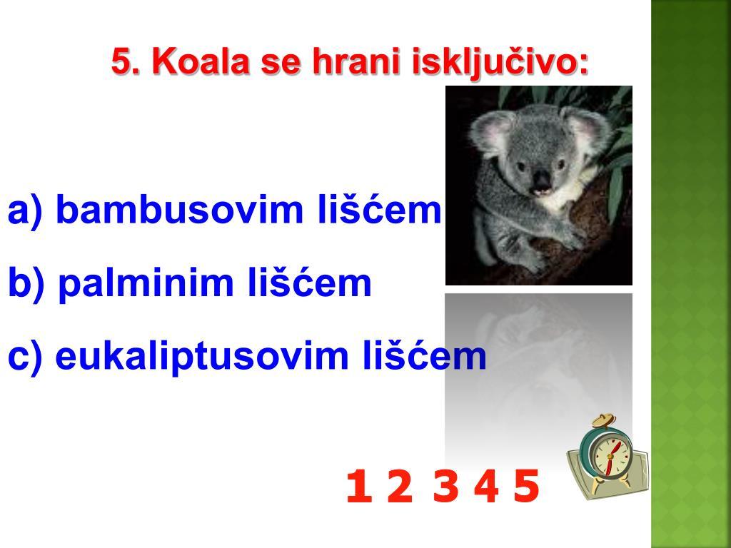 5. Koala se hrani isključivo: