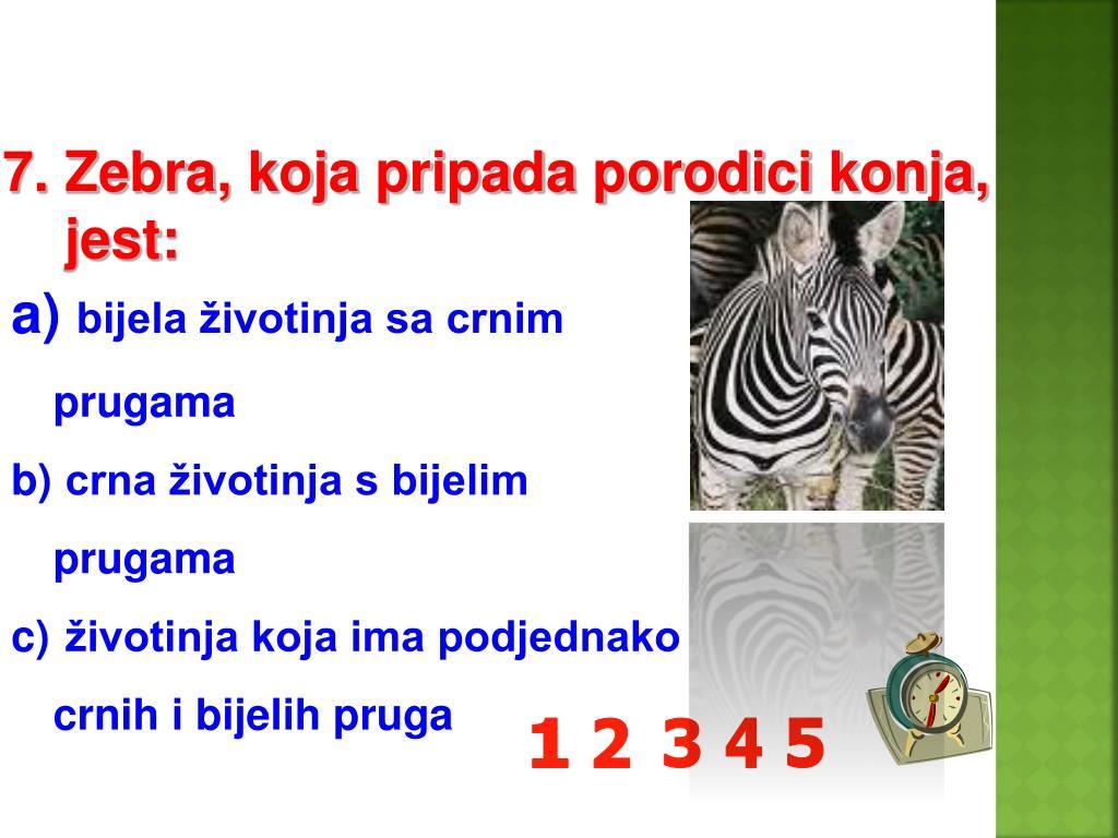 7. Zebra, koja pripada porodici konja,