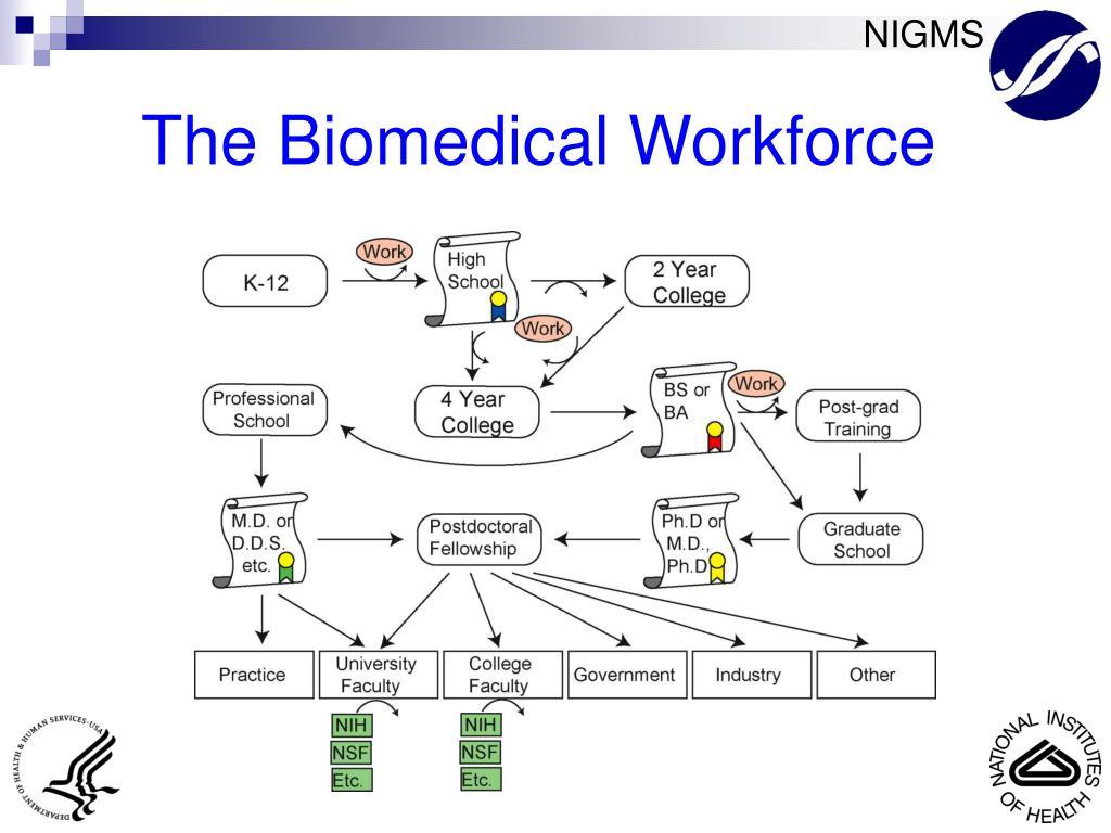The Biomedical Workforce