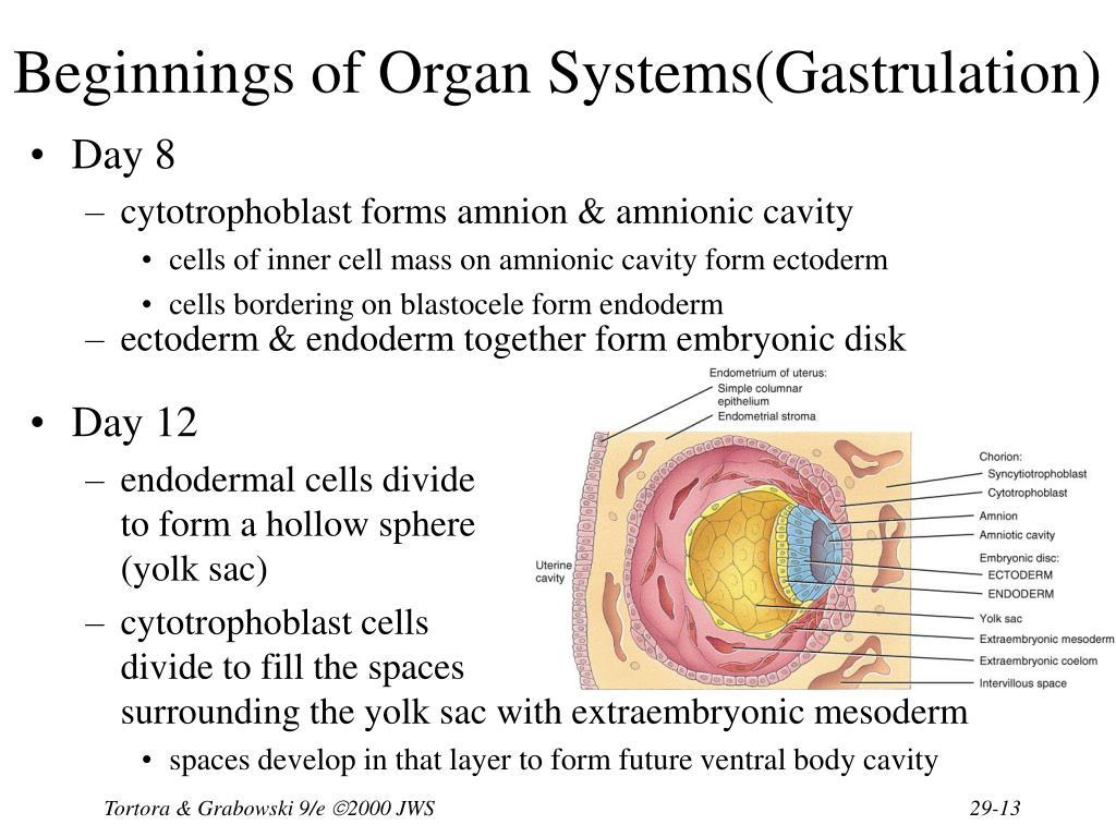 Beginnings of Organ Systems(Gastrulation)