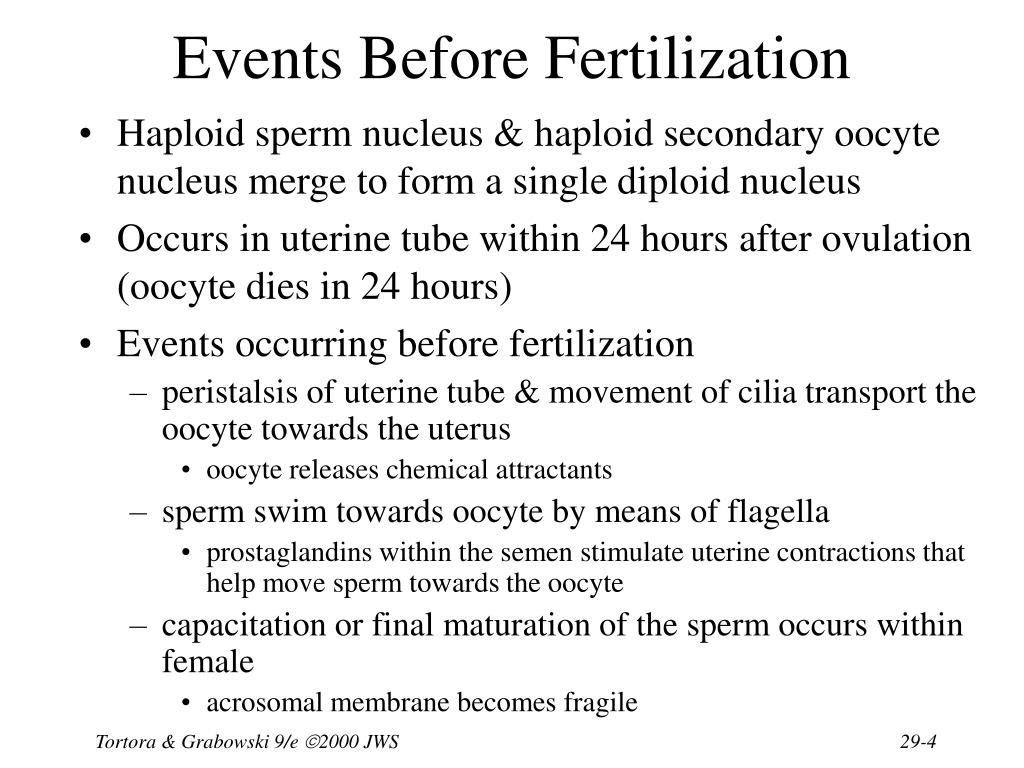 Events Before Fertilization