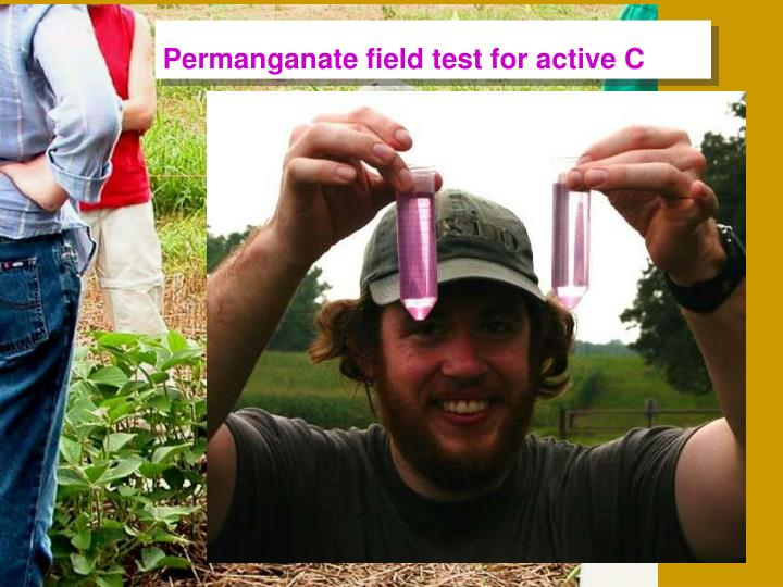 Permanganate field test for active C