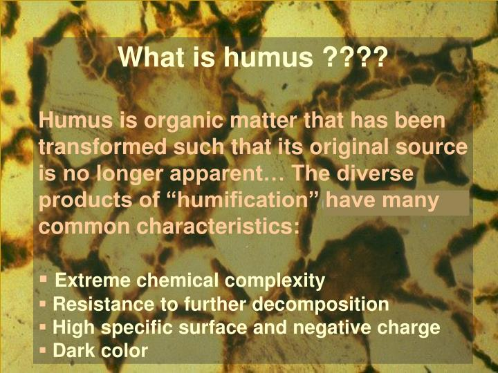 What is humus ????