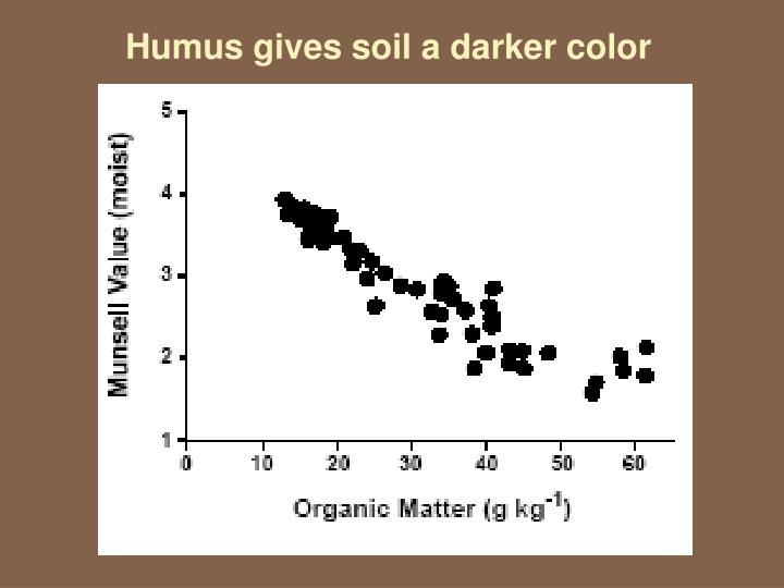 Humus gives soil a darker color