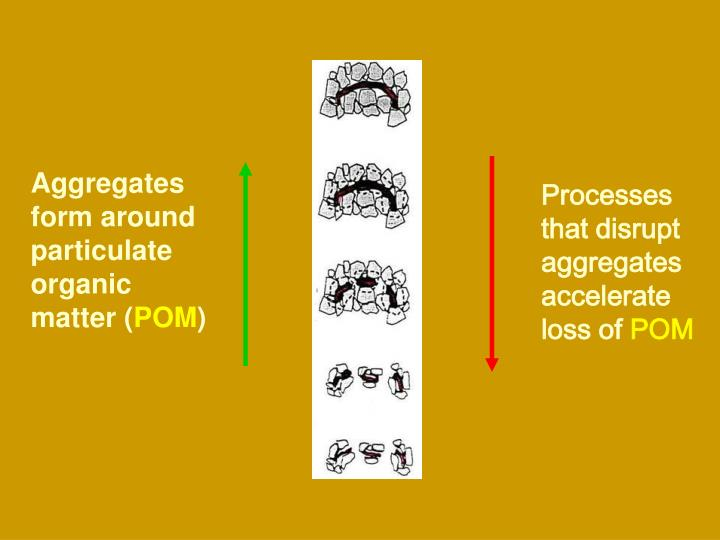 Aggregates form around particulate organic matter (