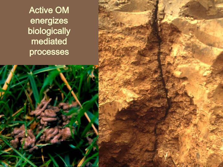 Active OM energizes biologically mediated  processes