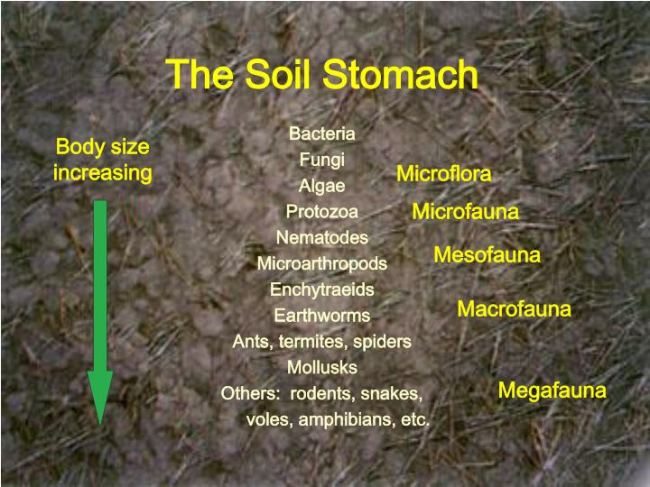 The Soil Stomach