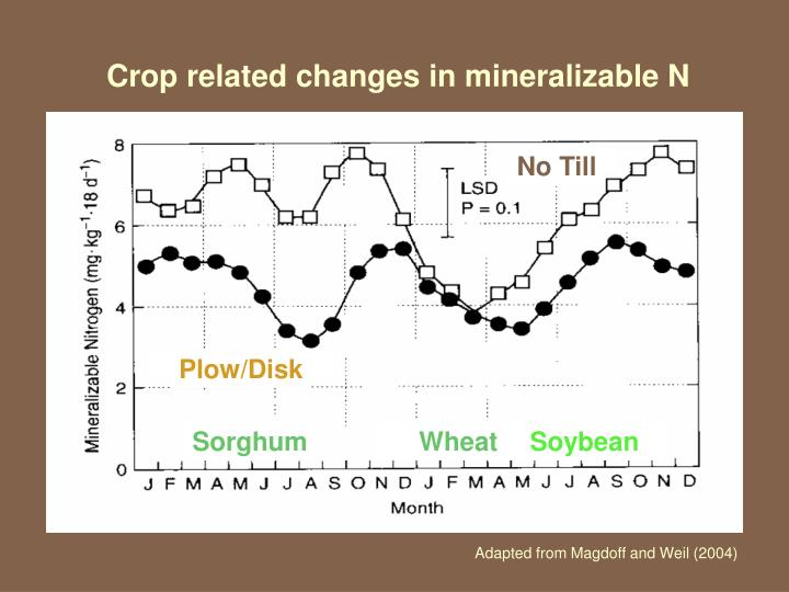 Crop related changes in mineralizable N