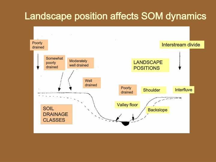 Landscape position affects SOM dynamics