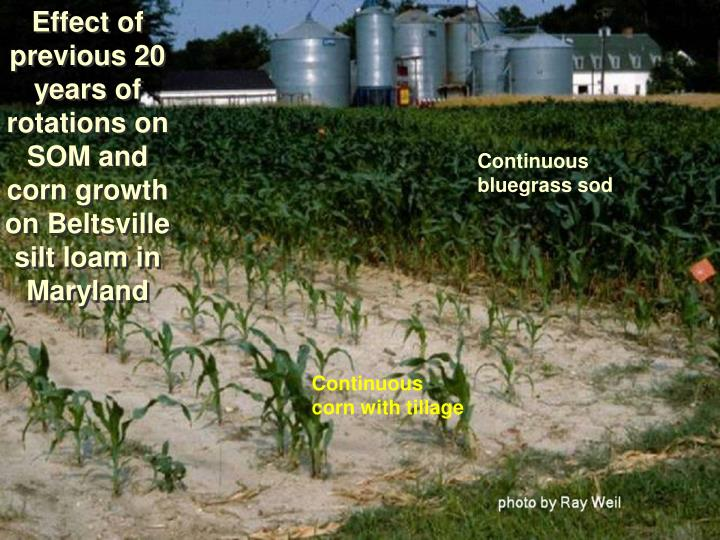 Effect of previous 20 years of rotations on SOM and corn growth on Beltsville silt loam in Maryland