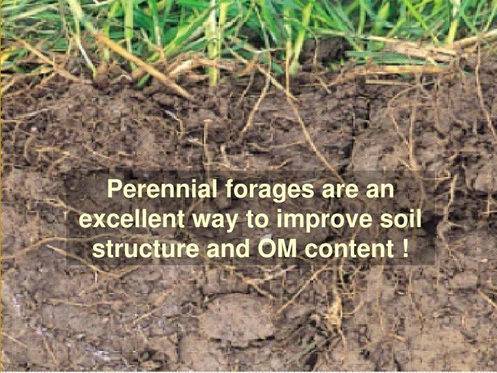 Perennial forages are an excellent way to improve soil structure and OM content !