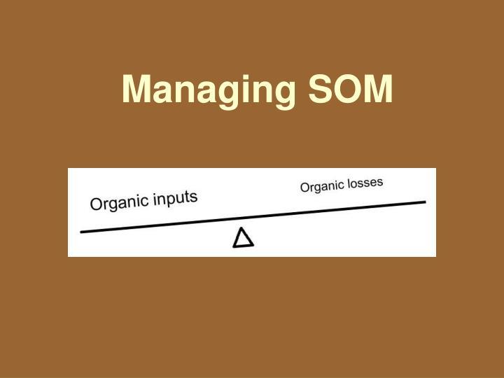 Managing SOM