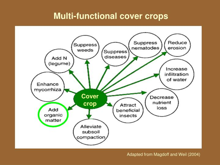 Multi-functional cover crops