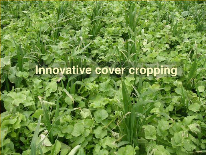 Innovative cover cropping