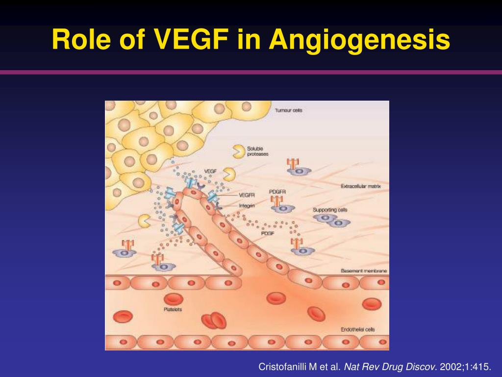 Role of VEGF in Angiogenesis