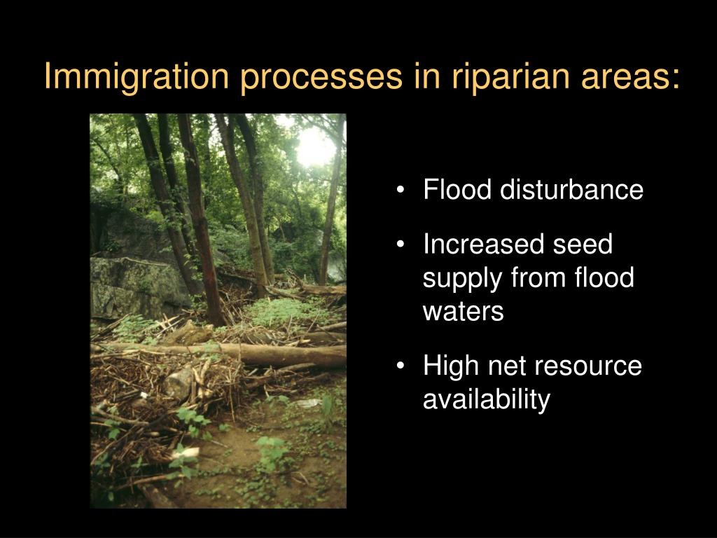 Immigration processes in riparian areas: