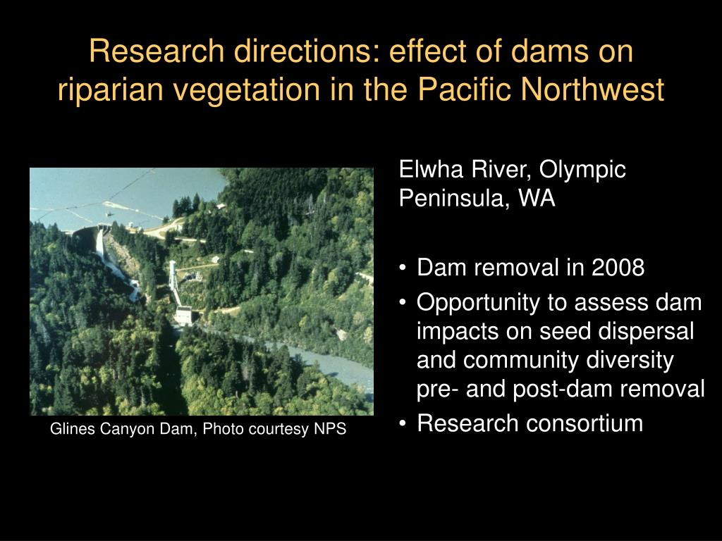 Research directions: effect of dams on riparian vegetation in the Pacific Northwest