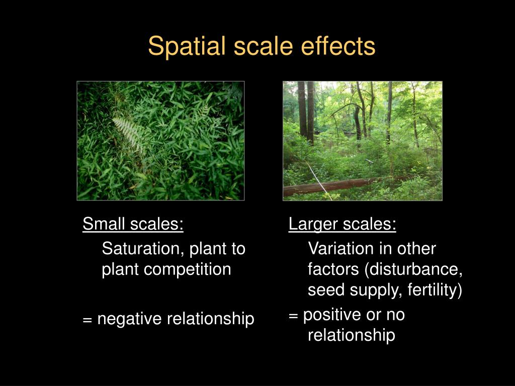 Spatial scale effects