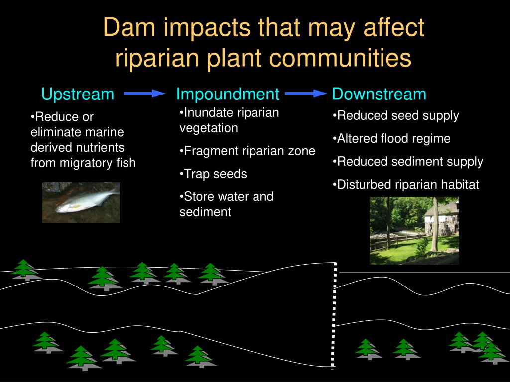 Dam impacts that may affect riparian plant communities
