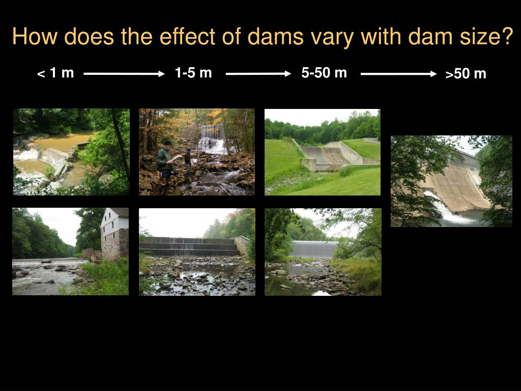 How does the effect of dams vary with dam size?