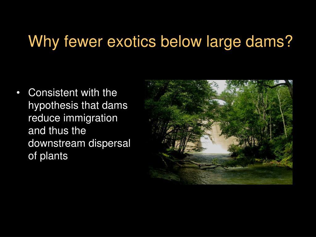 Why fewer exotics below large dams?
