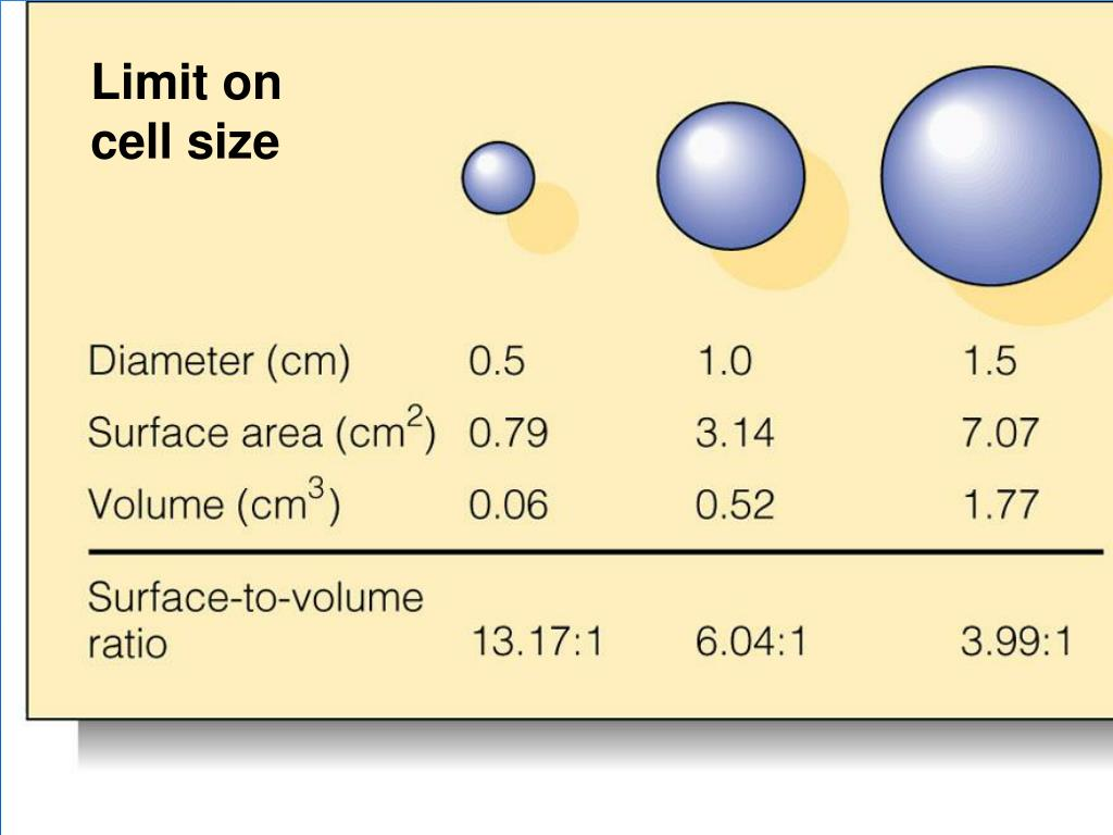Limit on cell size