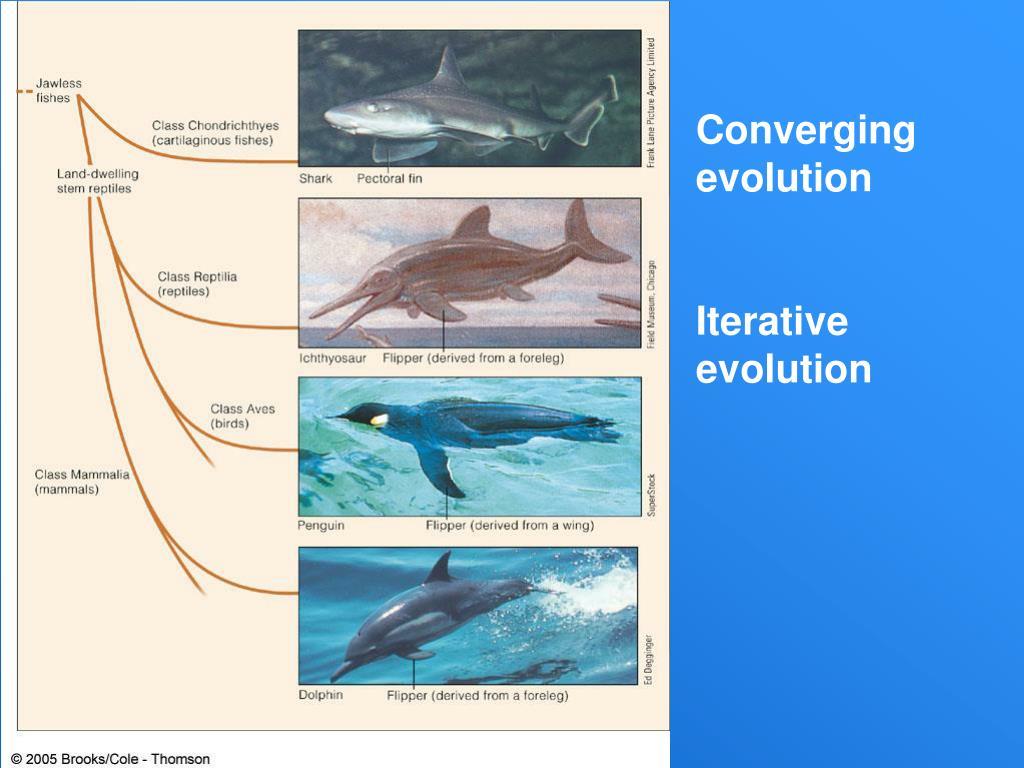 Converging evolution