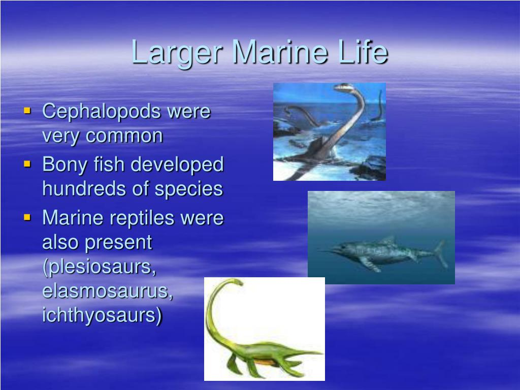 Larger Marine Life