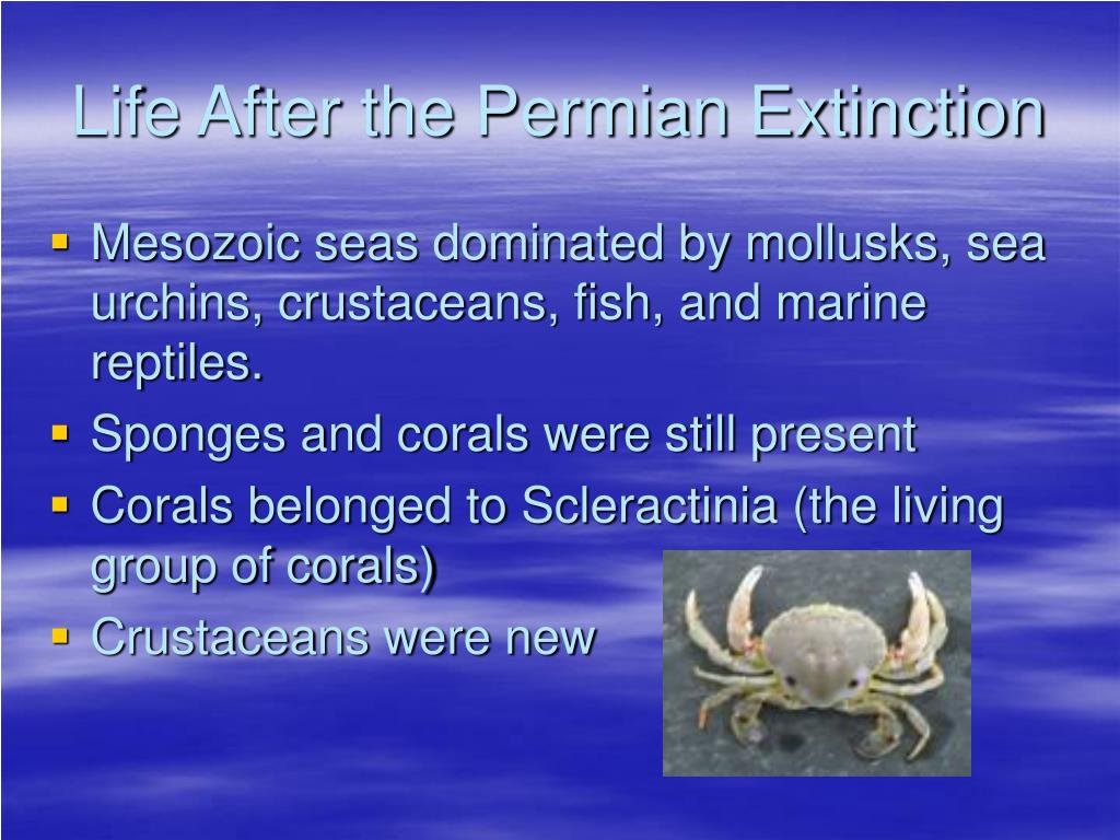 Life After the Permian Extinction