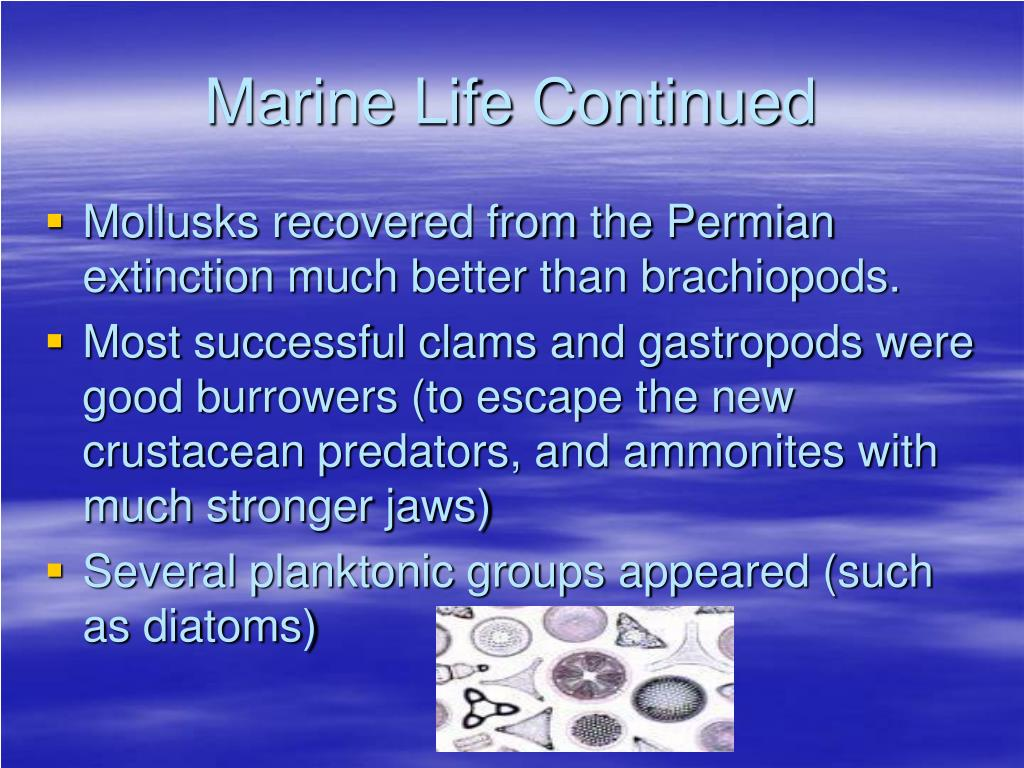 Marine Life Continued