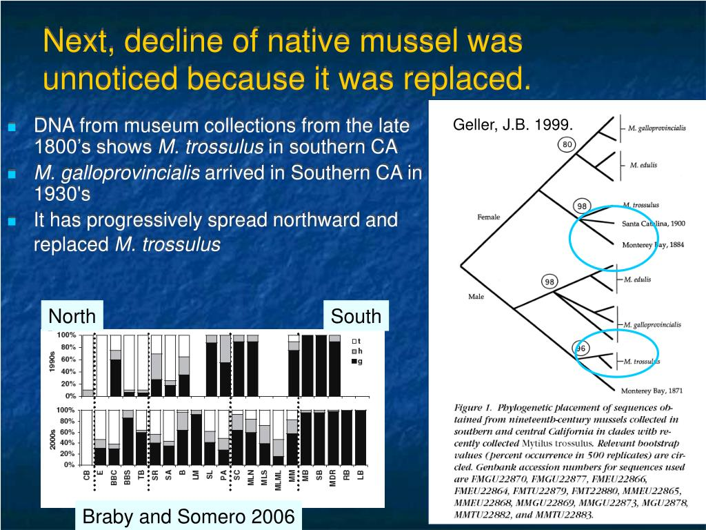 Next, decline of native mussel was unnoticed because it was replaced.