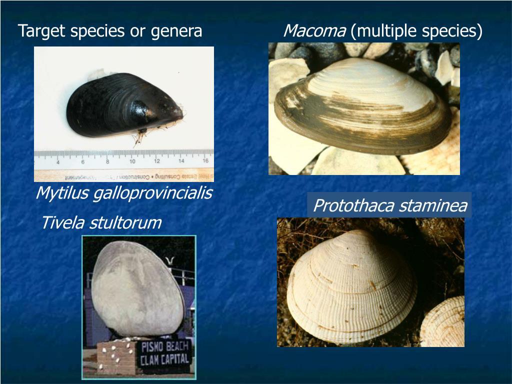 Target species or genera