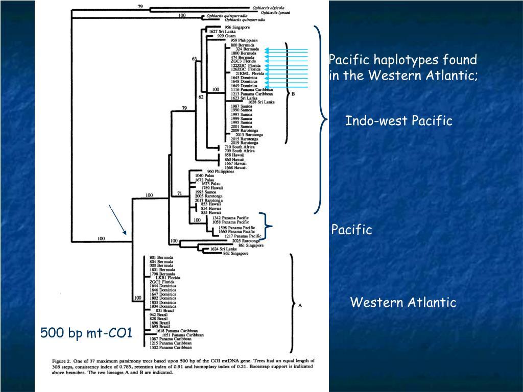Pacific haplotypes found