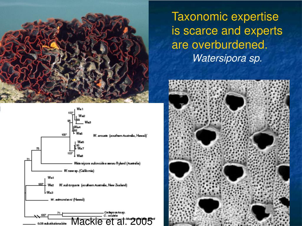 Taxonomic expertise is scarce and experts are overburdened.